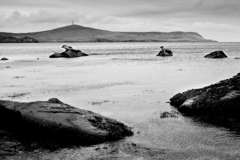 Shetland Seals