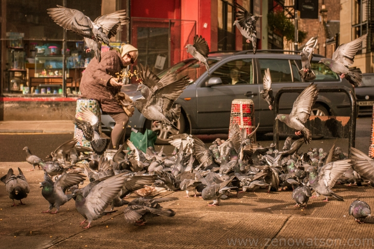 Pigeons IMG_0342